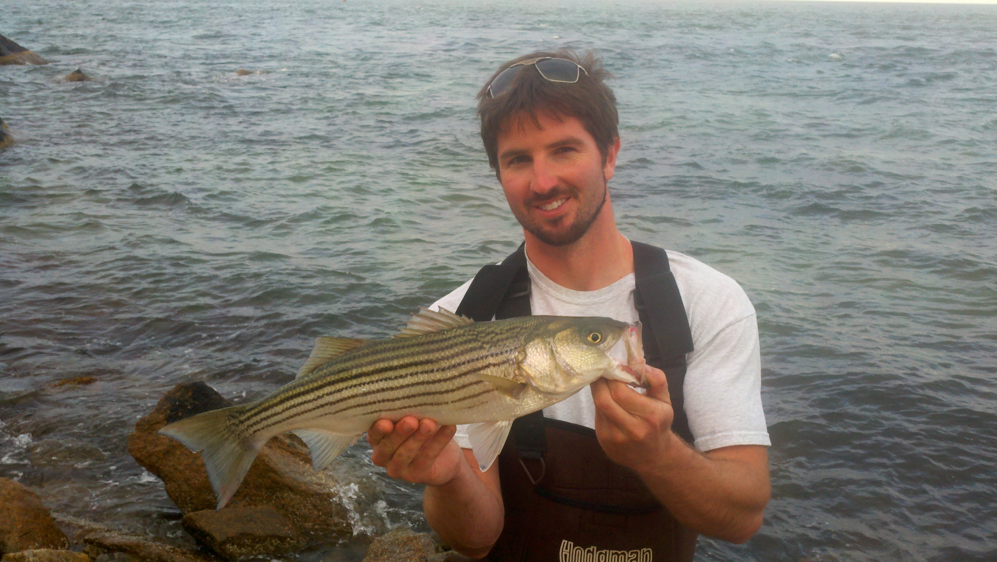 Cape cod surf fishing report for june 12 for Cape cod fishing report
