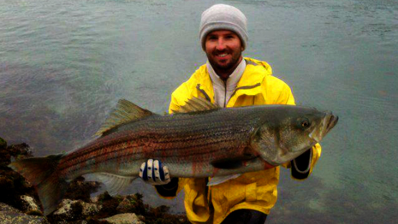 fishing cape cod canal striped bass