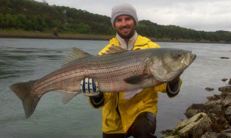 Cape cod canal fishing report 45 7 pound striped bass for Cape cod canal fishing report