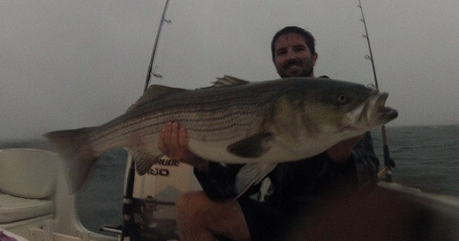 striped bass fishing cape cod