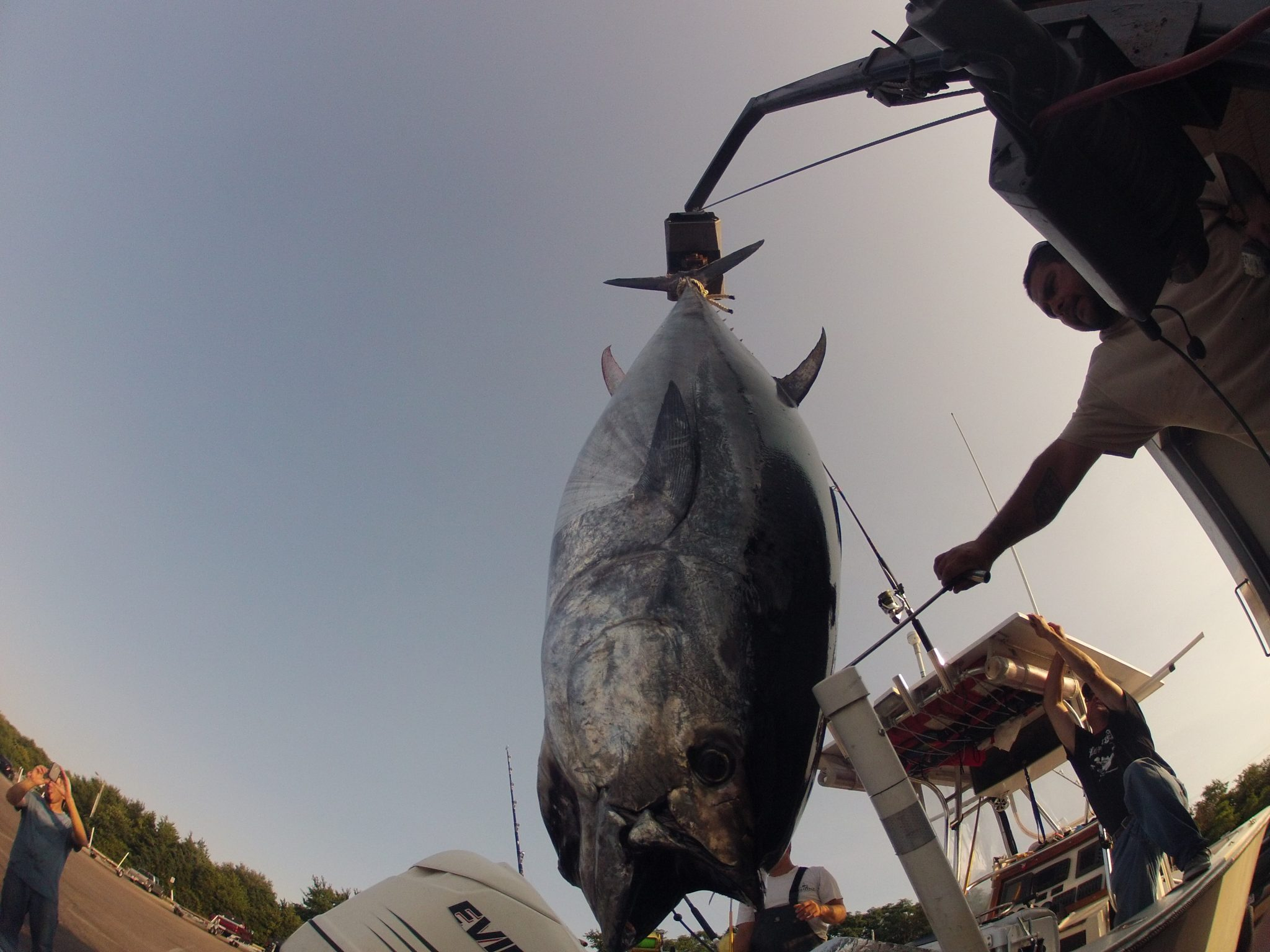 Cape cod bay giant tuna fishing during october for Closest fishing store