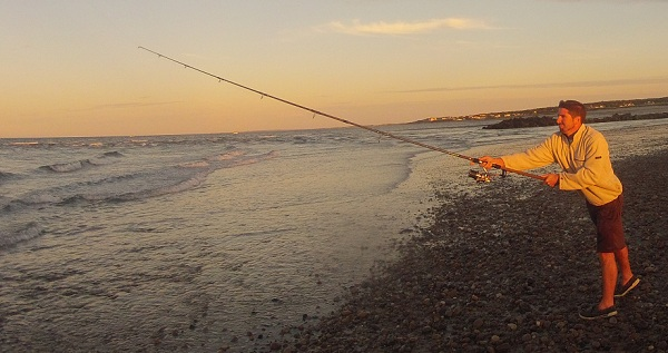 surf fishing report for cape cod october 12, Fishing Bait