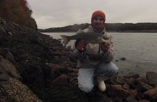 Fishing the cape cod canal and beyond for bass and tuna for Cape cod fishing report