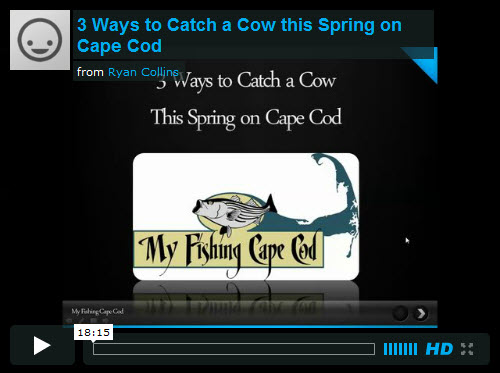 cape cod fishing spring