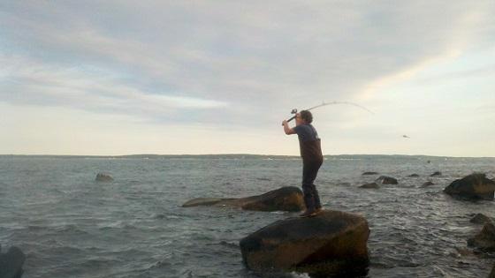 may cape cod surf fishing