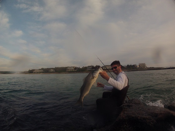 Catching tautog and stripers from shore on cape cod for Surf fishing for stripers