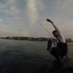 A Double Header of Tautog and Stripers from Shore thumbnail
