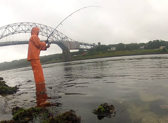 cape cod canal fishing report july 25