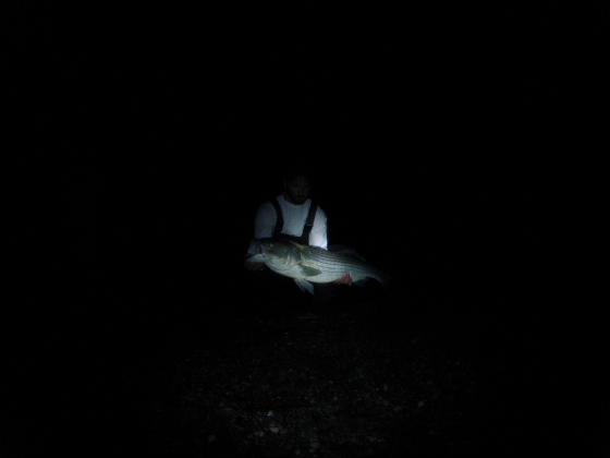 An epic night in the surf latest cape cod fishing report for Surf fishing at night