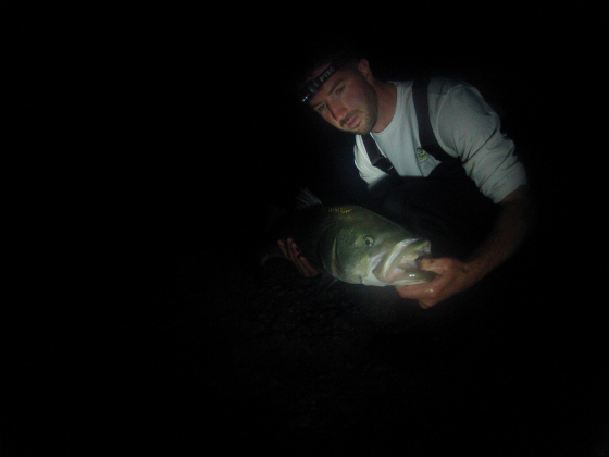 Cape cod canal fishing with topwater plugs for Surf fishing at night