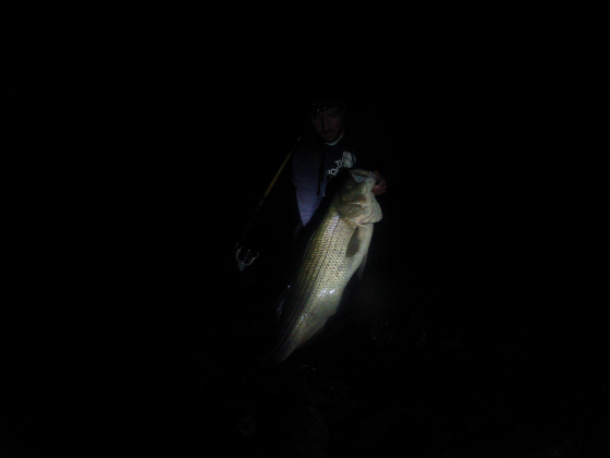 3 places to surfcast for big stripers this week on cape for Night bass fishing
