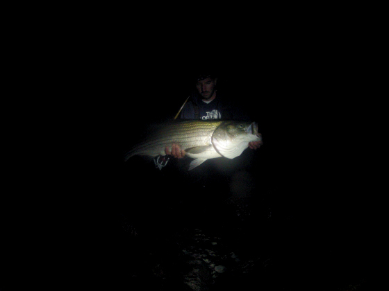 Why tonight is the night for a 50 pounder from shore for Striper fishing at night