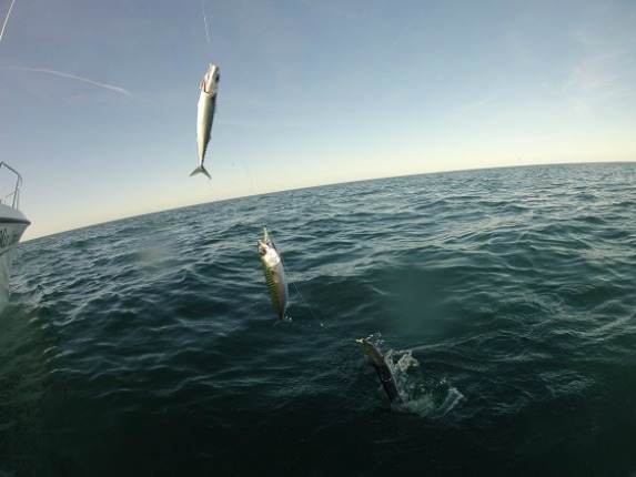 3 Cape Cod Fishing Spots Perfect For Fishing With Kids