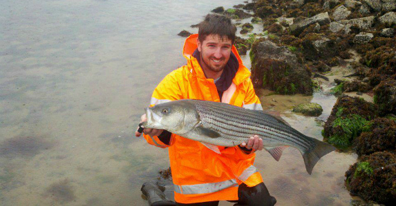 cape cod herring stripers