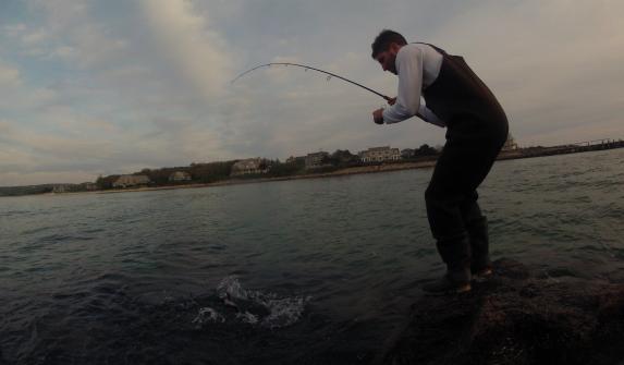 cape cod tautog shore fishing