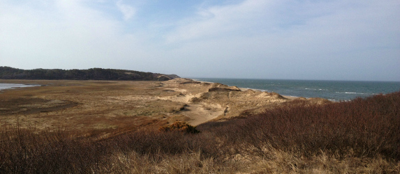 cape cod bay dunes