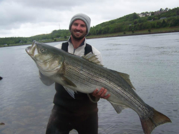 45 pound cape cod canal striped bass