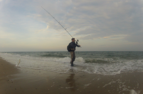 cape cod surfcasting report