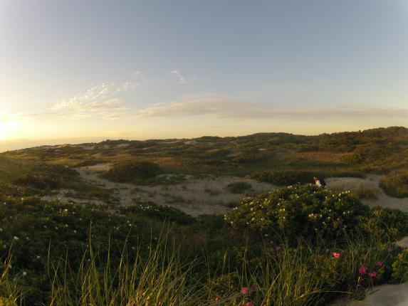 cape cod dune landscape