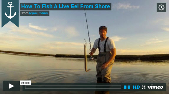 how to fish a live eel from shore