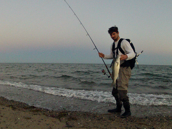 schoolie bass surfcasting cape cod