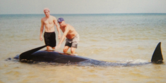 pilot whale stranded cape cod
