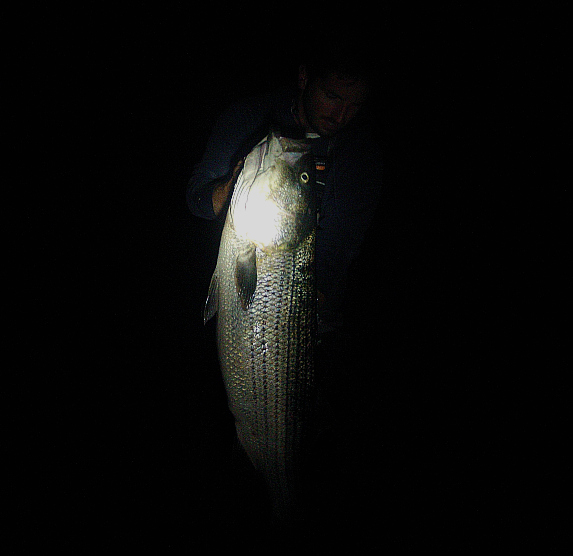 cape cod night fishing from shore for striped bass