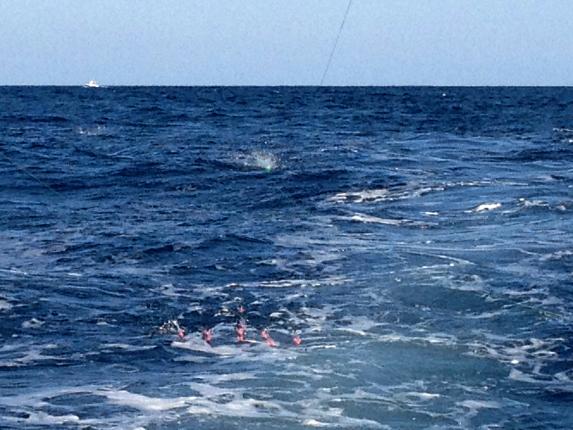spreader bars cape cod tuna fishing