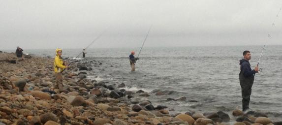 surfcasting cuttyhunk island my fishing cape cod