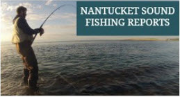 My fishing cape cod for Nantucket fishing report
