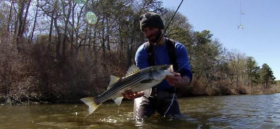 striped bass for cape cod fishing report saturday april 18