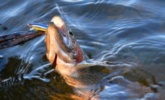 cape cod rainbow trout fishing