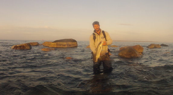 vineyard sound surfcasting report fishing for striped bass