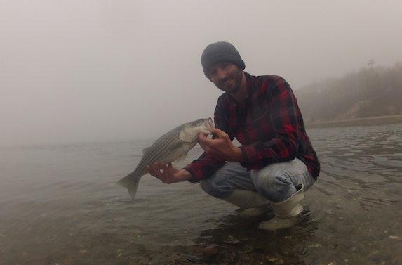 schoolie striped bass cape cod tidal estuary