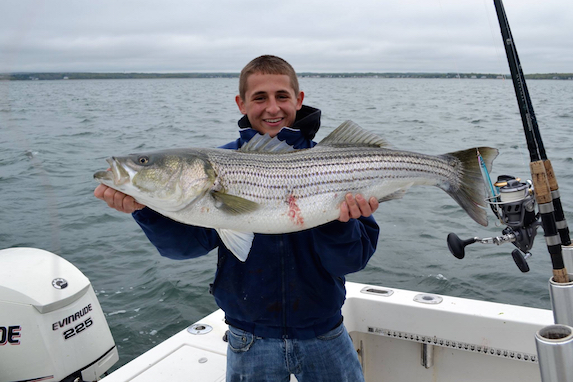cape cod striped bass fishing report capstar charters