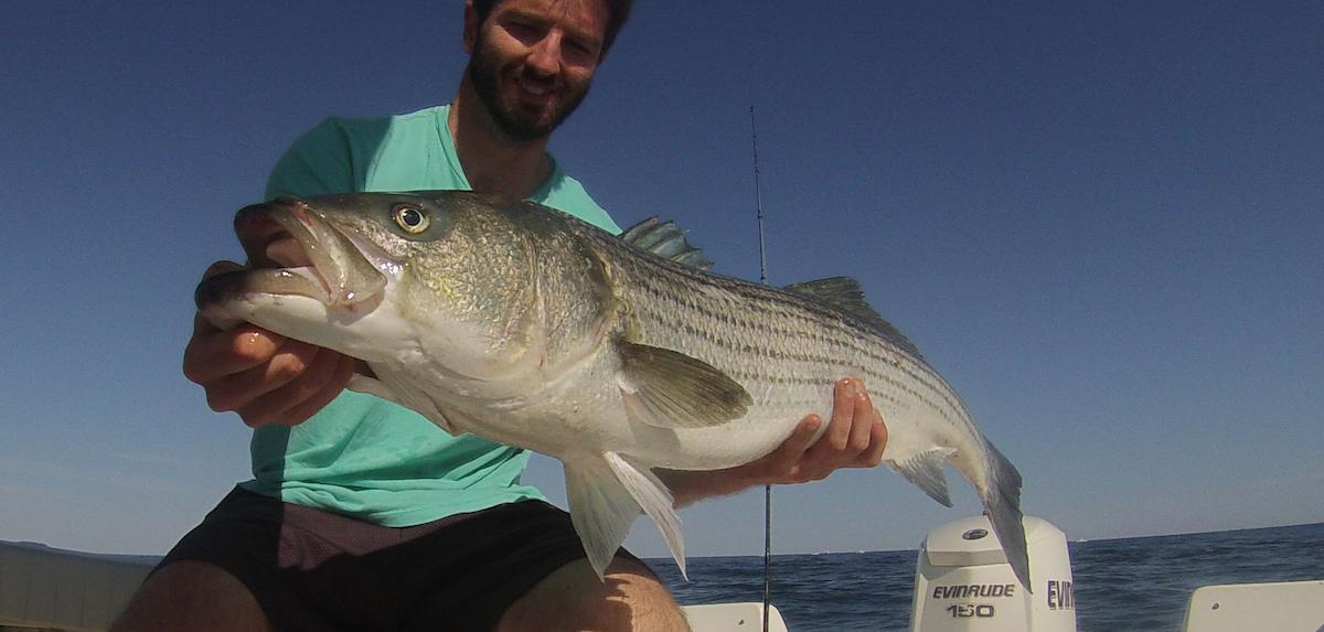 Cape cod fishing reports for Striper fishing cape cod