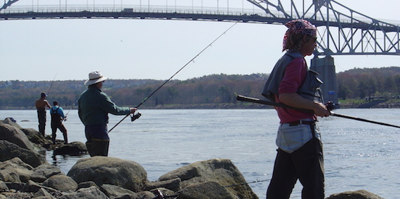 bait fishing at the cape cod canal