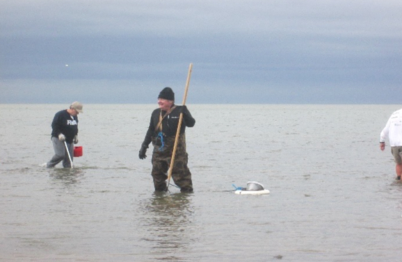 oystering on cape cod