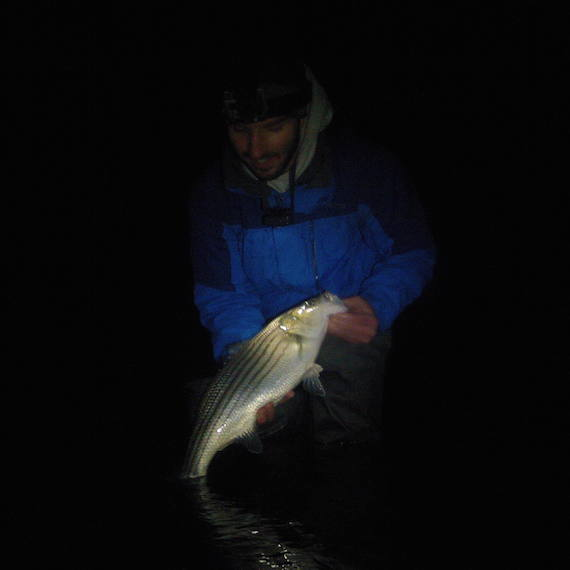 My first striper of the year for Striper fishing at night