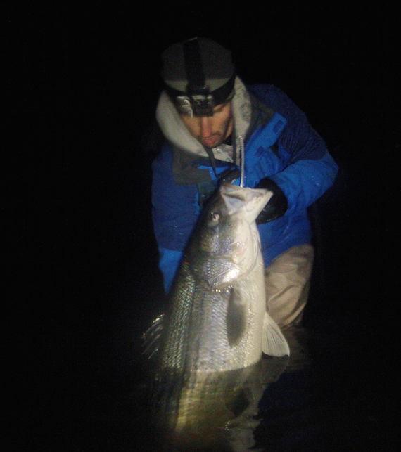 Monster holdover striper for Striper fishing cape cod