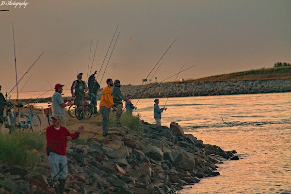 Weekend update june 17 for Cape cod fishing