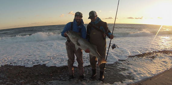 ryan collins dave steeves surfcasting