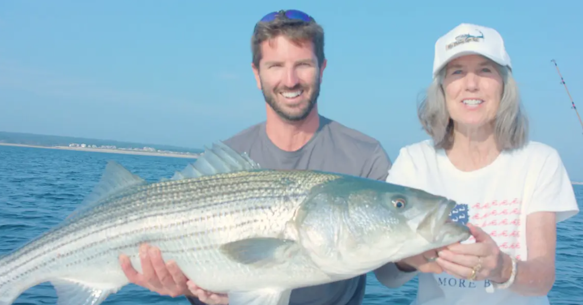 big cape cod bay striped bass caught on tube and worm