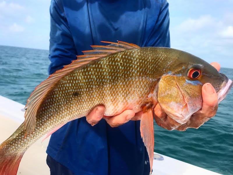 Fishing the florida keys a tropical paradise for Florida tropical fish